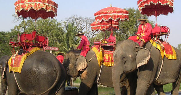 Tayland'da fil yaşlı kadını ezdi!