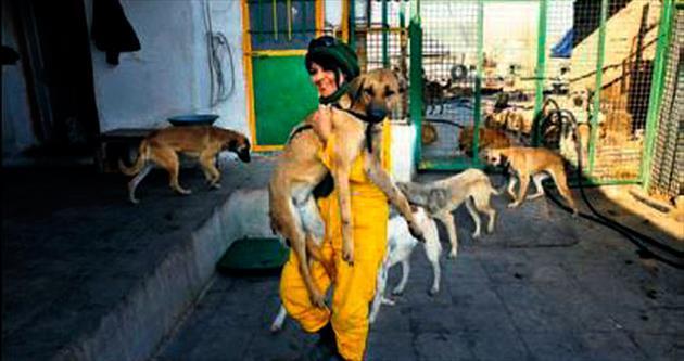 İran'da sadece bir köpek barınağı var