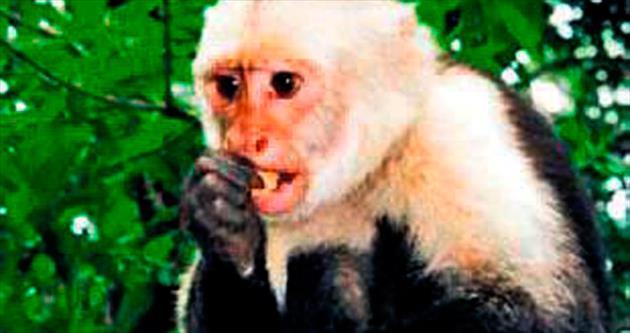 Maymunlar kanmıyor markaya