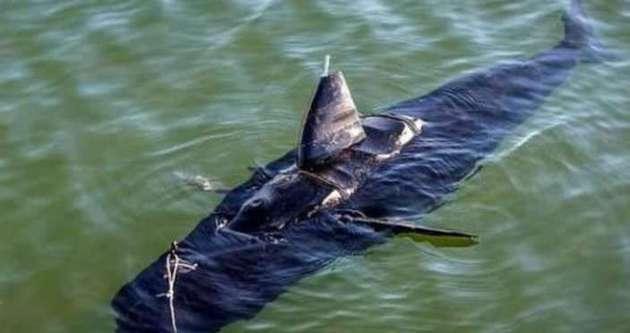 ABD'nin yeni silahı: Casus balık