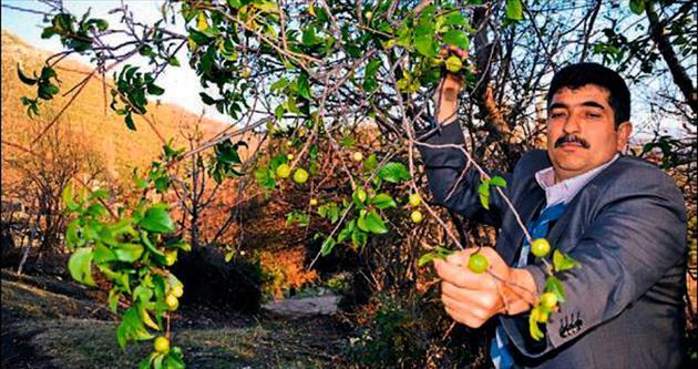 Zamansız bahar ağaçları şaşırttı