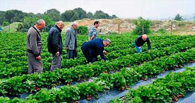 Manisa'da organik tarımcı sayısı arttı