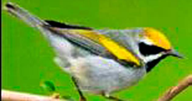 Kuşlar fırtınayı önceden bilebiliyor