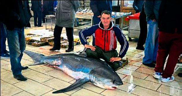 300 kiloluk köpek balığı sevindirdi