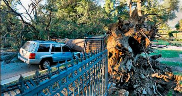 Fırtına, ağaçları kökünden söktü