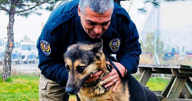 Kahraman köpek Rocky emekliliğe hazırlanıyor