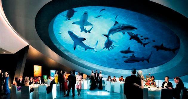 Köpekbalıkları eşliğinde parti