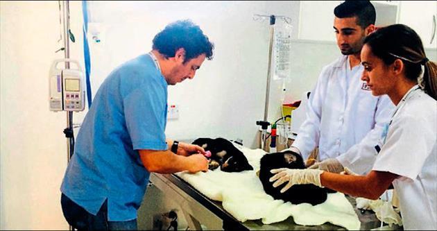 Hayvan hastanesi büyük ilgi çekiyor