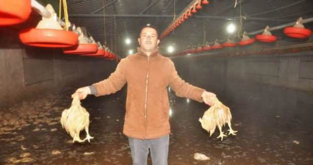 22 bin tavuk telef oldu