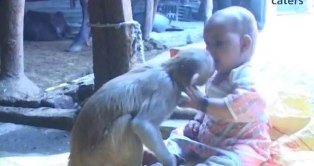 Maymun küçük kızı evlat edindi