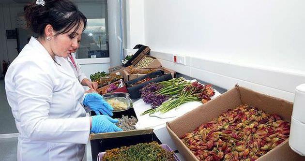 Bitkiler kozmetik ürüne dönüşüyor