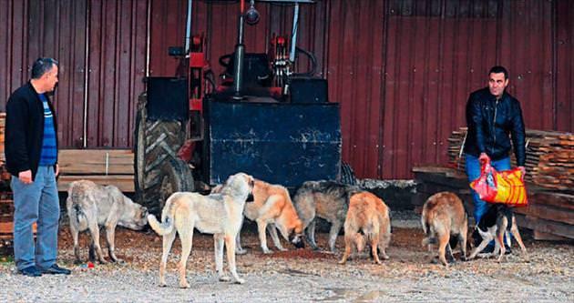 Adana'ya sokak köpekleri taşındı