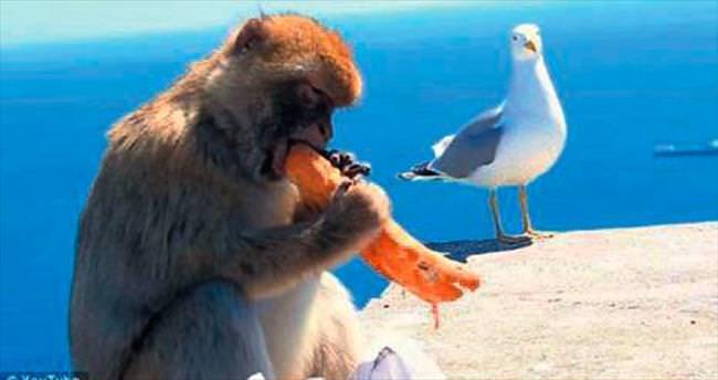 Turist çantasından sandviç çalıp yedi