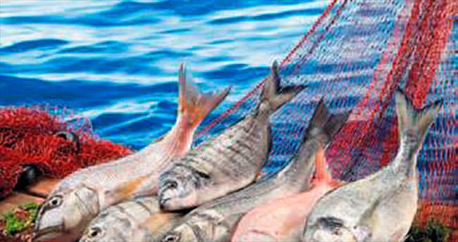 Türk balıkları dünya sofralarını süslüyor