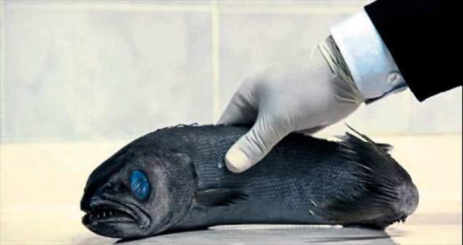 Yağ balığı zehirliyor
