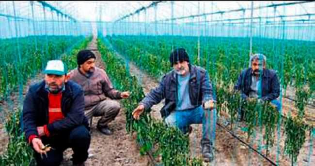 Mersin'de kesintiler çiftçiye darbe vurdu