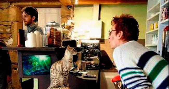 İsviçre'de 'kedi kafe' açıldı