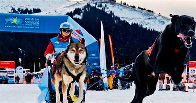 Kızak köpekleri Fransa'da yarıştı