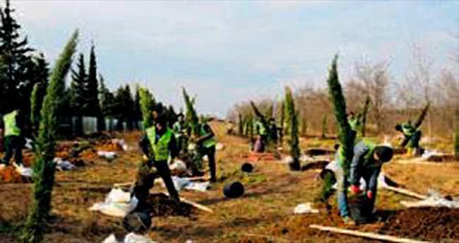 115 bin yeni ağaç dikiliyor