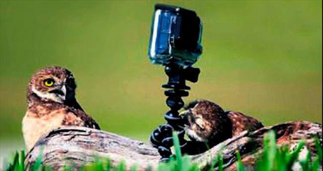 Baykuşlar kameranın hakkından geldi