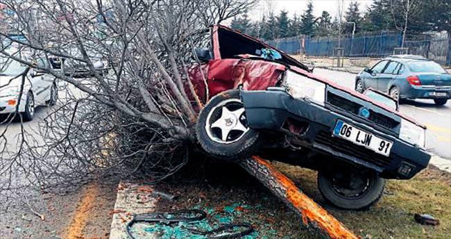 Otomobil ağaca tırmandı