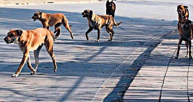Çankaya'yı köpekler bastı