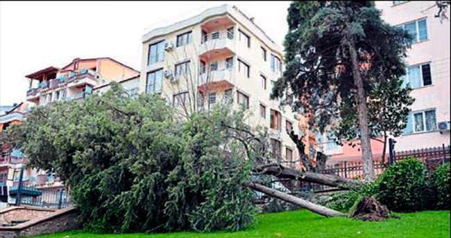 Şiddetli lodos ağaçları devirdi