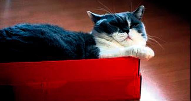 Kediler kutudayken güvende hissediyor