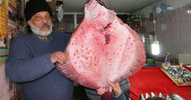 Balıkçıların ağına 12 kiloluk kalkan balığı takıldı