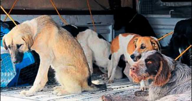 30 köpek ölüme terk edildi