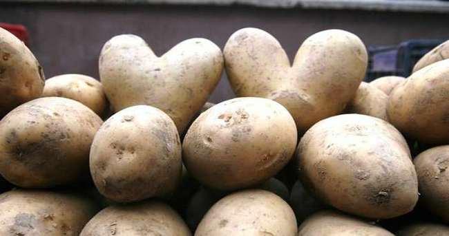Aşk patatesleri görenleri şaşırttı