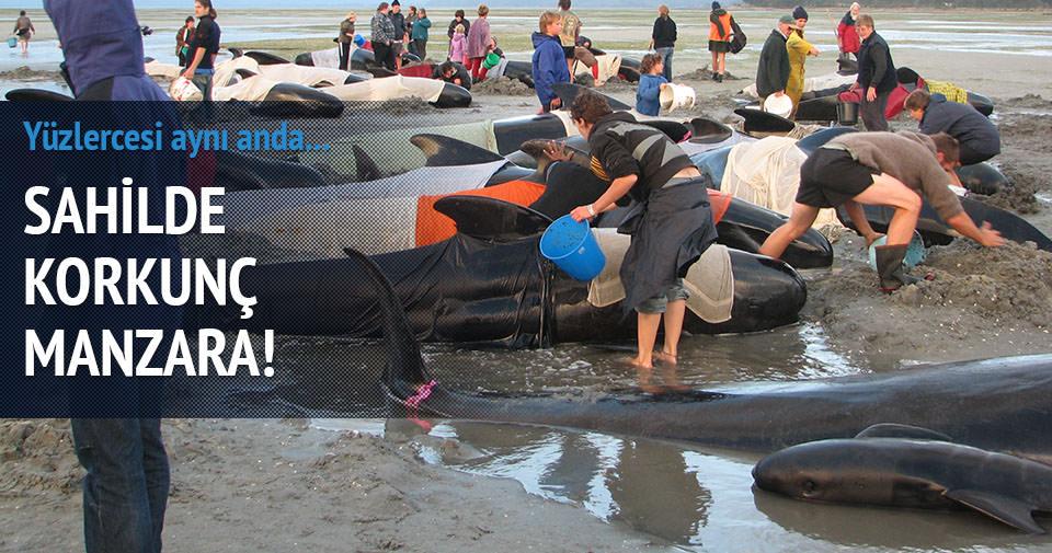 Yüzlerce balina karaya vurdu