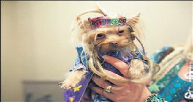 Moda haftasında köpekler de var