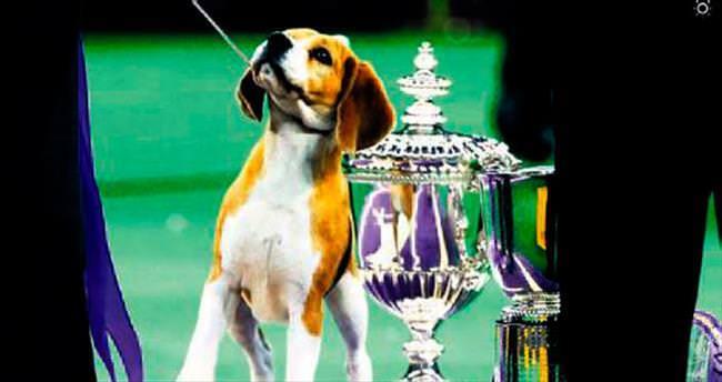2015'in en güzel köpeği o oldu