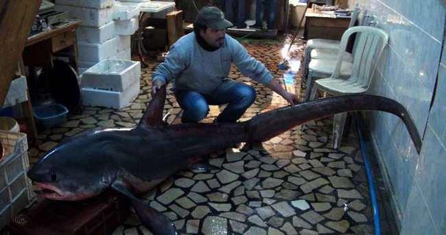 Ağlara testere köpek balığı takıldı