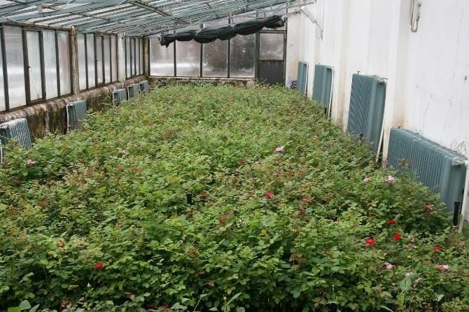 Erzincan Belediyesi Yaza Yeşillikle Başlıyor