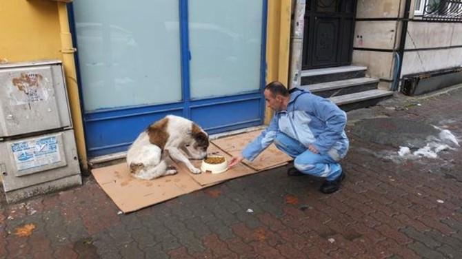 Beyoğlu'nda Sokak Hayvanları İçin Seferberlik Başlatıldı