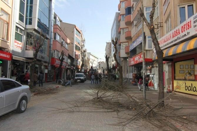 Kırklareli'nde Ağaç Budama Çalışmaları Devam Ediyor