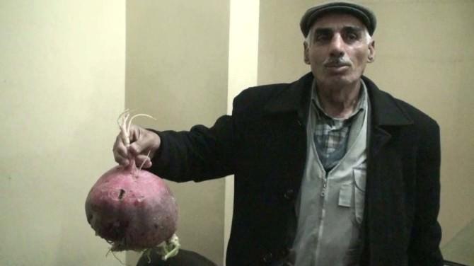 Kızıltepeli Çiftçi 4 Kilogram Ağırlığında Turp Yetiştirdi