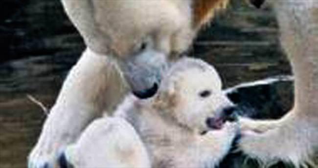 İkiz yavrularla ilk gün saadeti