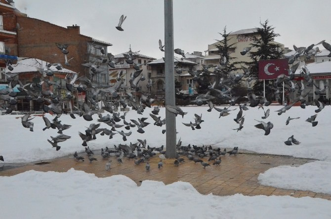 Belediyeden Kuşlara Yem, Köpeklere Barınak
