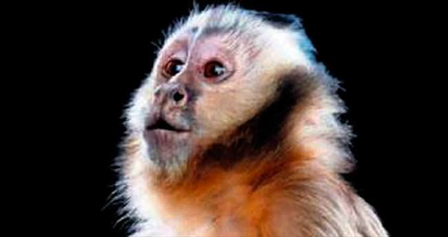Avustralya'ya maymun isyanı