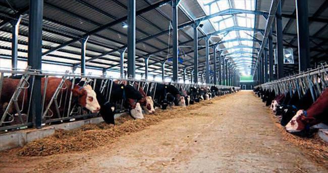 MAT Tarım'ın örnek süt çiftliği hizmette