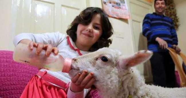 Lösemili kızı öksüz kuzu hayata bağladı