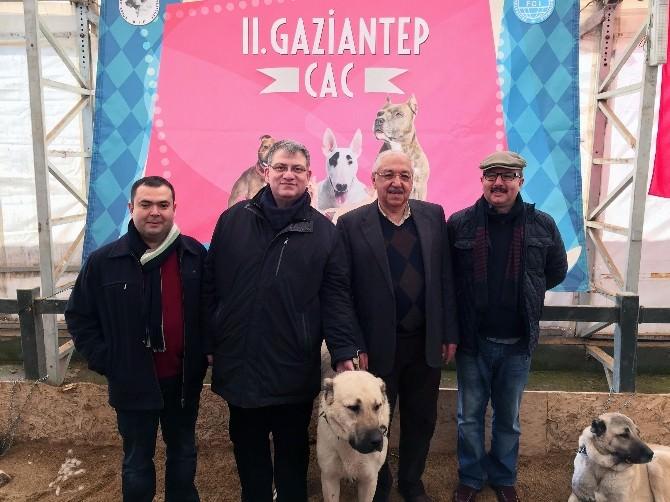 En Güzel Köpek Irkları Gasbik'te Yarıştı