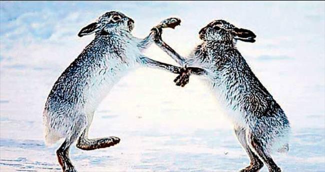 Karda boks maçı