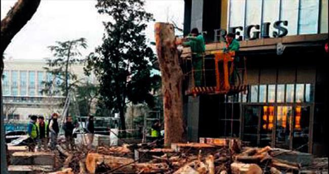 Şişli Belediyesi 50 yıllık çınarı kesti