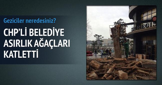 CHP'li belediye Sabancı Holding için asırlık ağaçları katletti