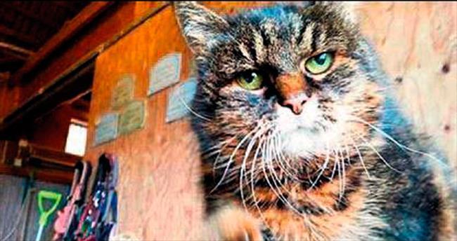 Missan, dünyanın en yaşlı kedisi olacak