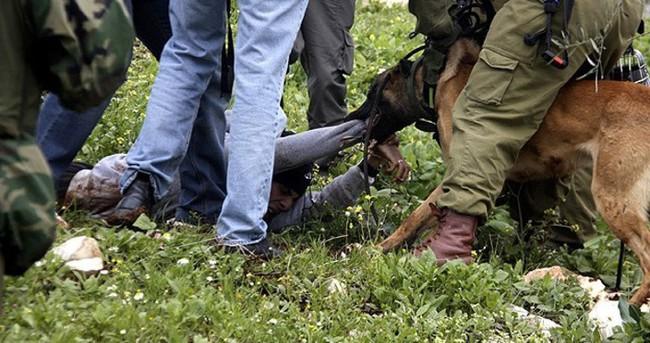 Köpekli işkenceye soruşturma